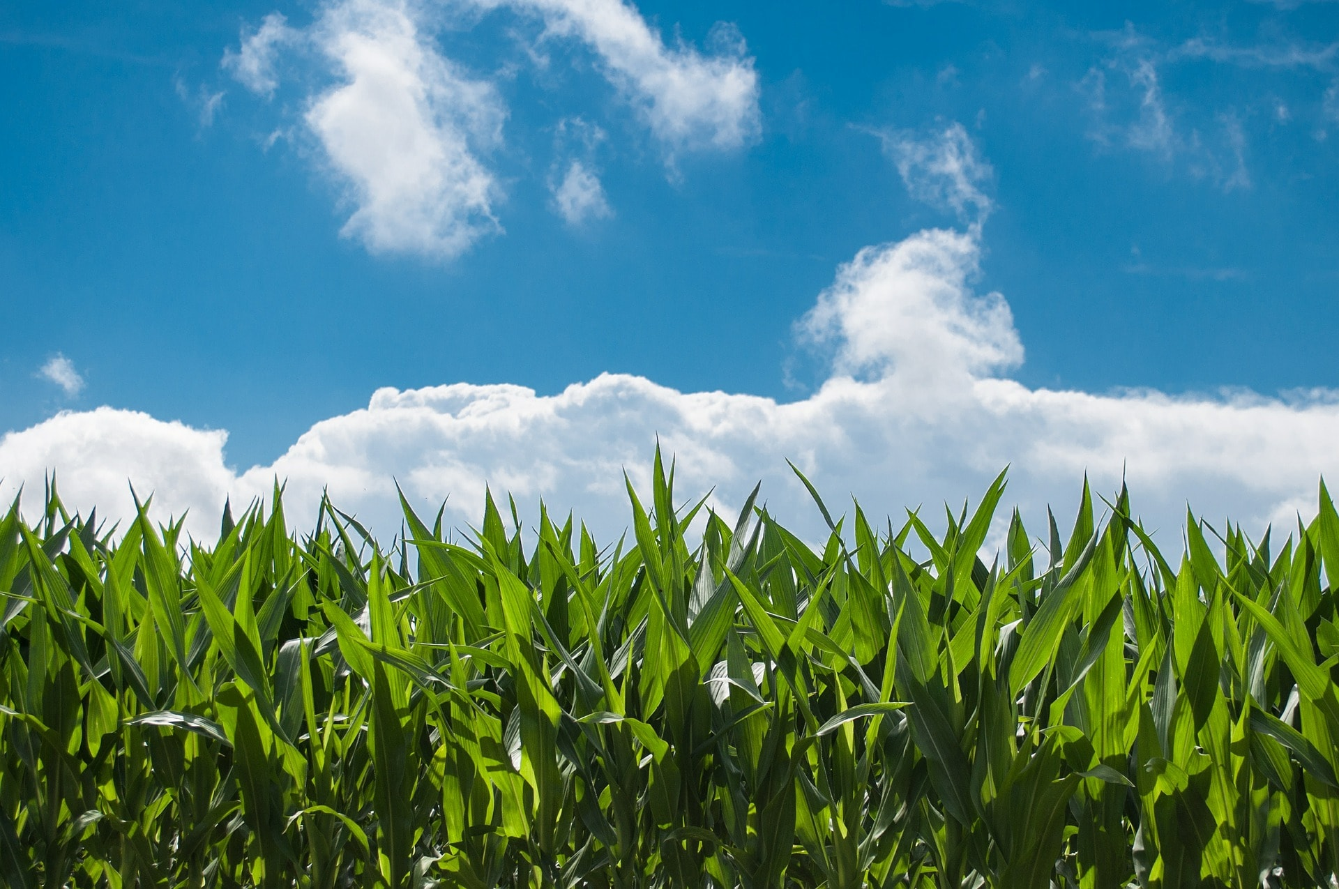 Corn Insights - Degrees of Freedom in Production Forecasting